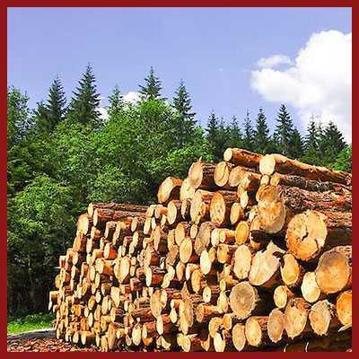 wood-bgw